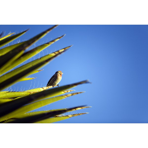 Bird perched on a yucca plant