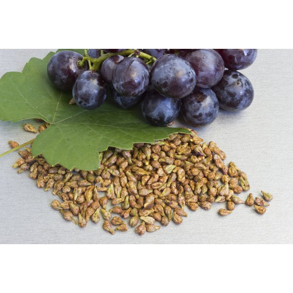 Grapes and grape seeds.
