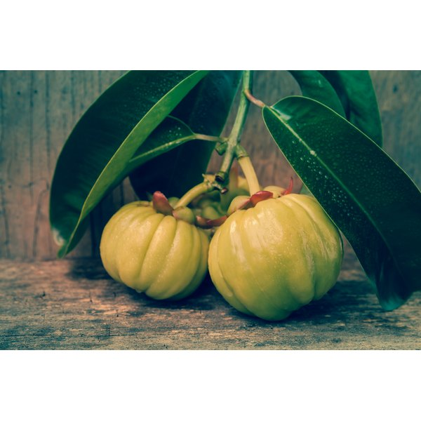 Garcinia cambogia fruit on a wood surface