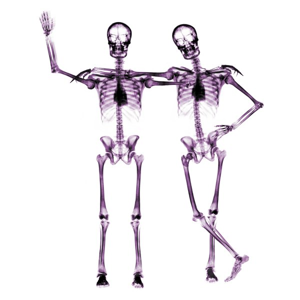 Your bones contain almost all of the body's calcium.