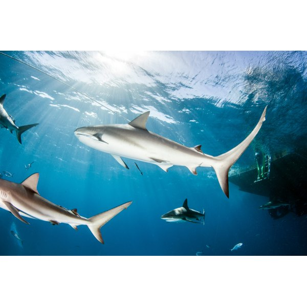 Some glucosamine hydrochloride supplements include shark cartilage as an ingredient.