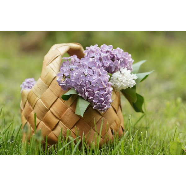Fresh picked lilacs in a woven basket in the grass.
