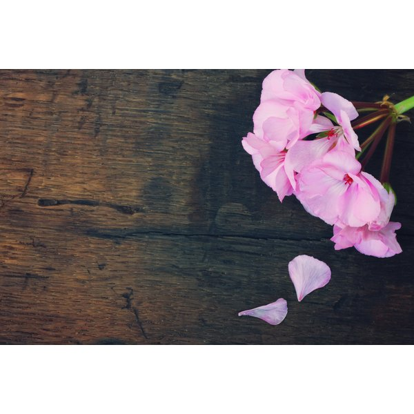 Rose geraniums are on a wooden board.
