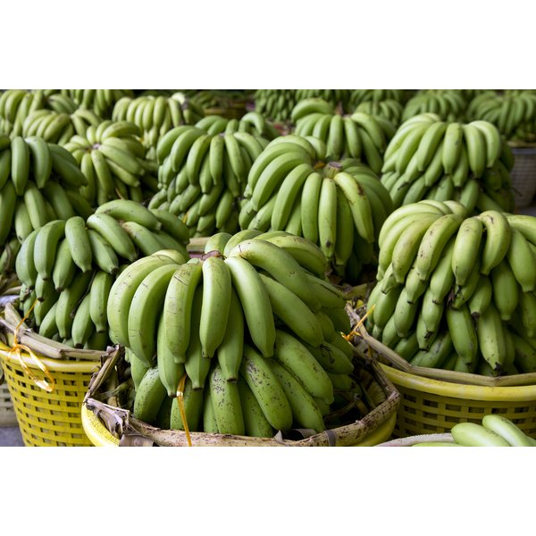 Unripe bananas for sale at a market.