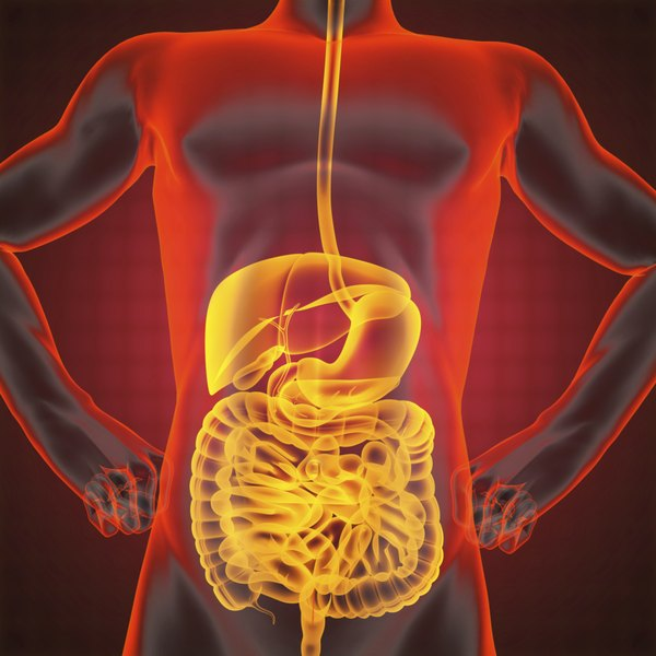 Urinary and digestive system.