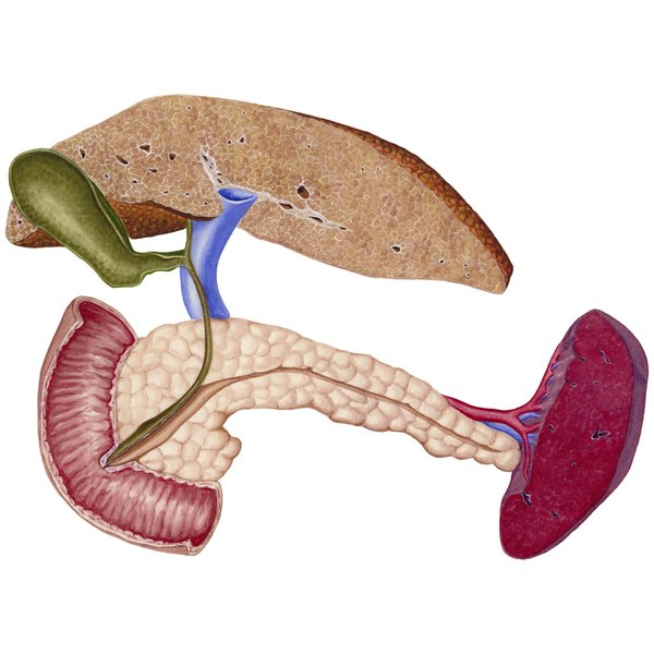 Cirrhosis of the liver shown with gallbladder