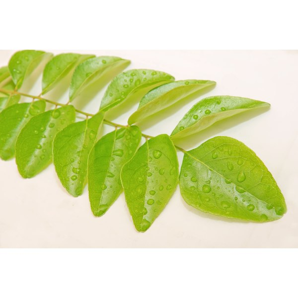 Curry leaves may help stave off gray hair.