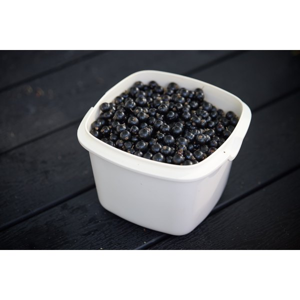 A container of blackcurrants.