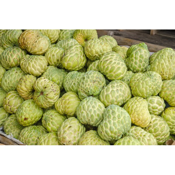 Noni plants for sale.