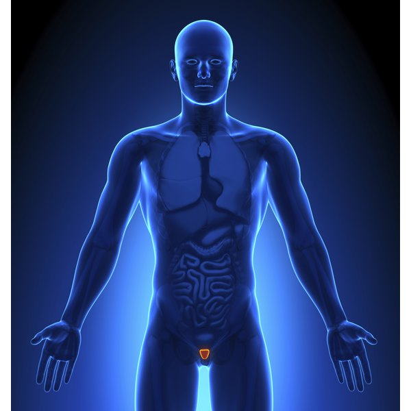 Illustration of male body highlighting the prostate.