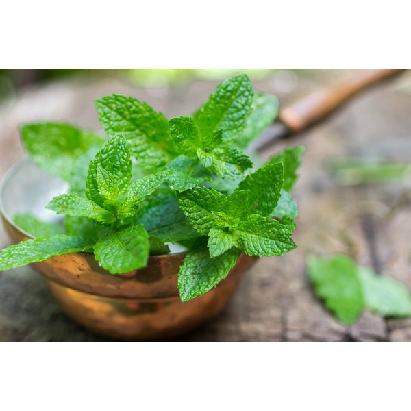 A bowl of fresh mint on a wooden table.