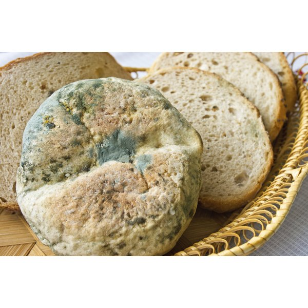 It S Not Uncommon For People To Accidentally Ingest Stale Food That May Be Sprouting Green Or Invisible Bacterial Spores The Symptoms Of Mold Ingestion Can