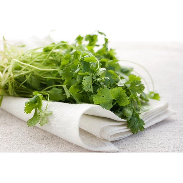 fresh cilantro on napkin