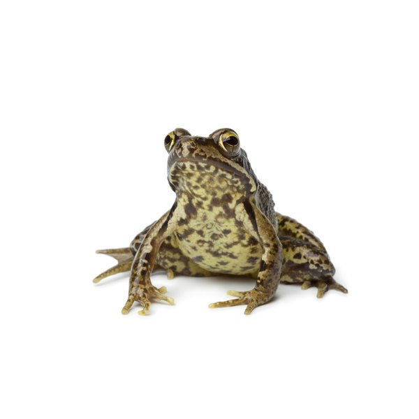 The Significance Of Frogs In Chinese Culture Synonym