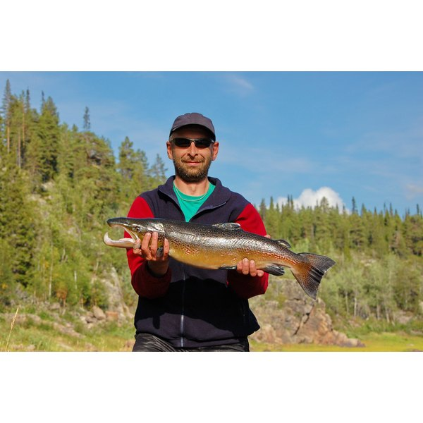 King salmon are some of North America's toughest sport fish.