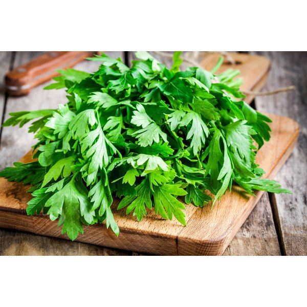 A fresh bunch of cilantro on a wooden cutting board.