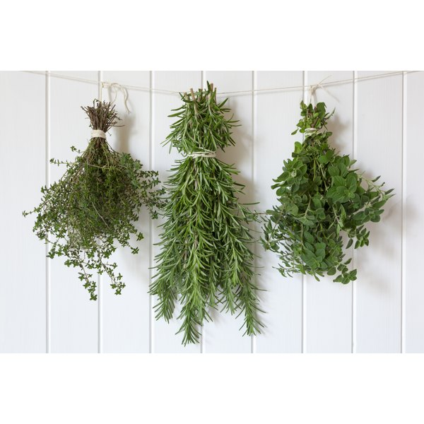 Bunches of fresh herbs hanging upside down to dry.