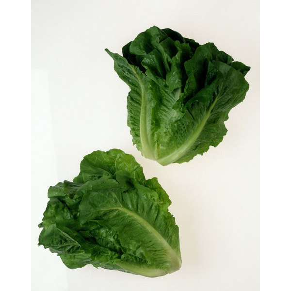Green leafy vegetables are high in folic acid.