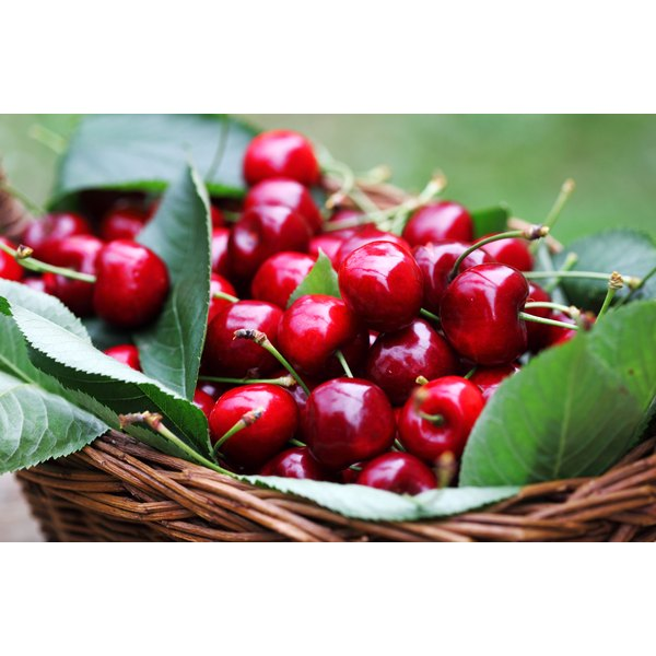A bowl of freshly picked red cherries in a basket.