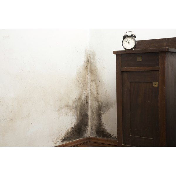 Black mold growth in the corner of a room.