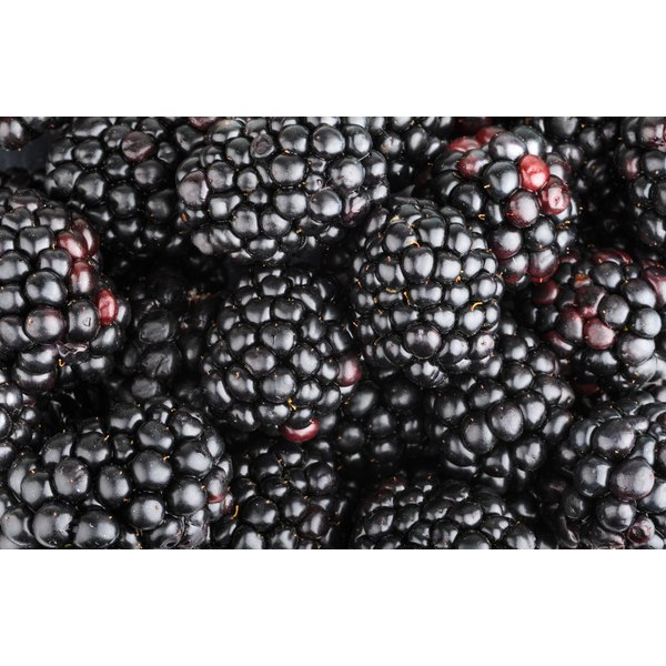 A close-up of fresh blackberries.