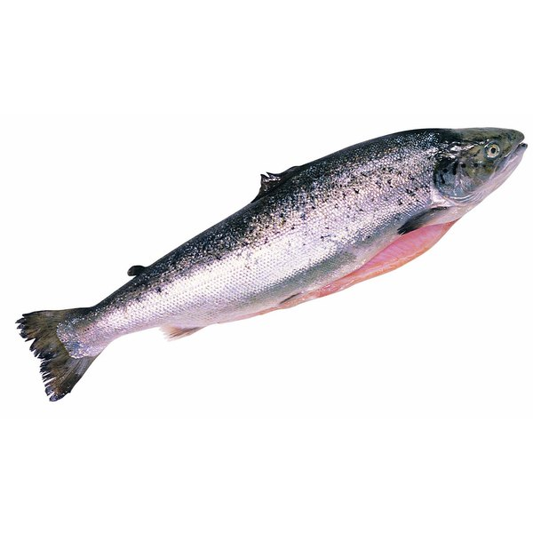 Salmon cheeks are expensive; instead, buy salmon heads, removing the cheeks manually.