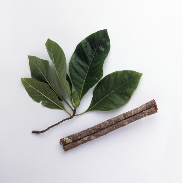 Quinine from the bark of the cinchona tree
