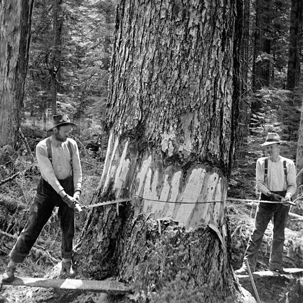 Lumberjacks have long needed sturdy boots in case a saw slips at the wrong time.