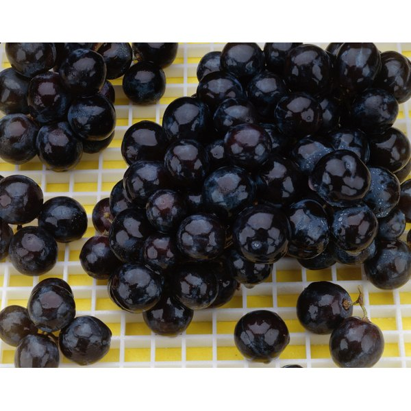 Blueberries can be part of a healthy diet to manage gout.