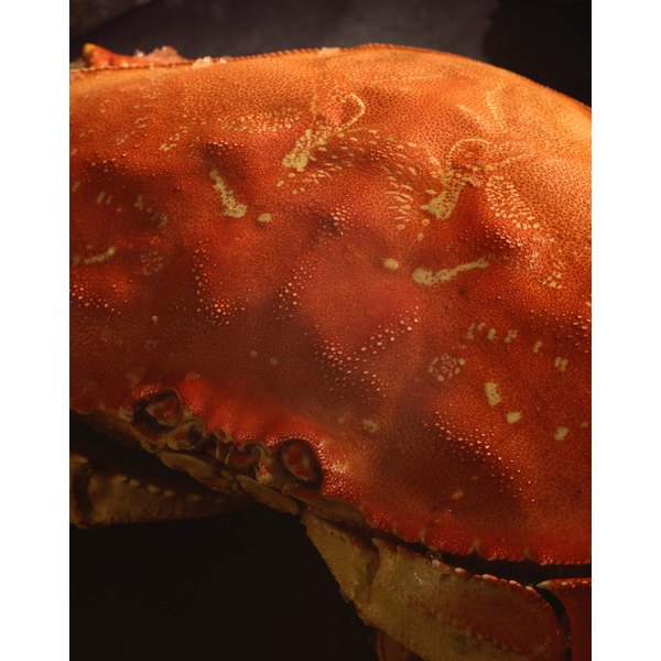 Frozen Dungeness crabs are precooked, and only need gentle reheating.