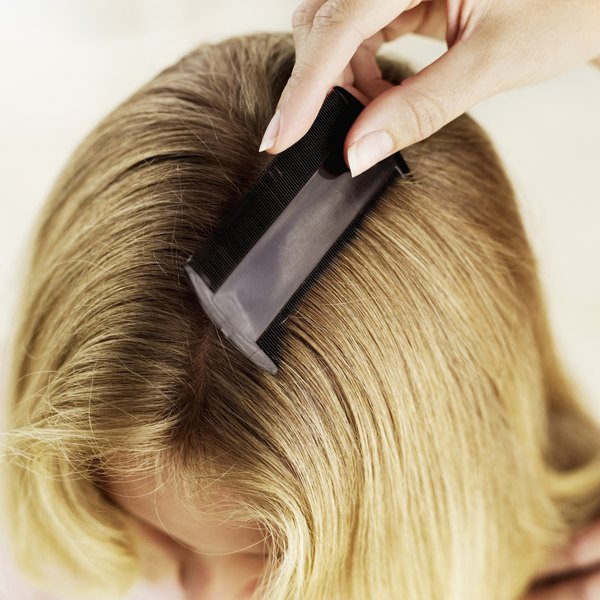 Nits may survive a lice treatment, so always use a nit comb after treating hair.