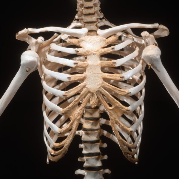 Four Main Parts Of A Skeletal System Healthfully