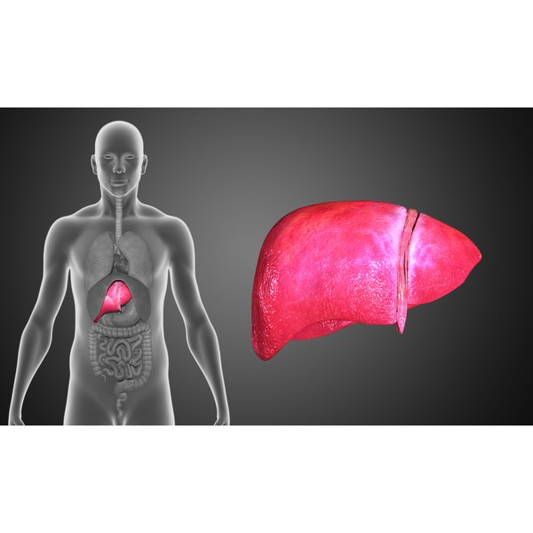 Cortisol levels have a direct effect on liver fat deposits.