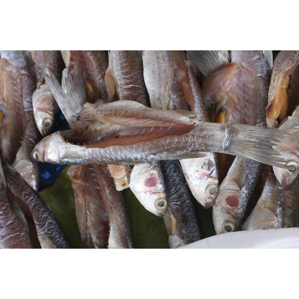 Salted and dried mackerel for sale at a fish market in Jamaica.
