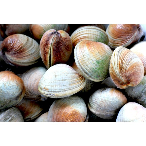 Littleneck clams for sale at a market in New Zealand.