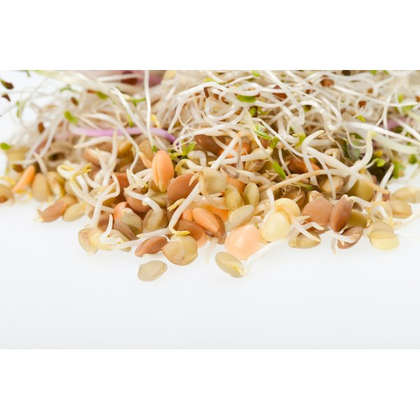 A close-up of mung bean and alfalfa sprouts on a white counter.