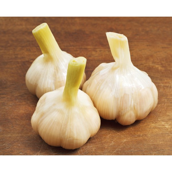 Garlic bulbs on a wooden surface