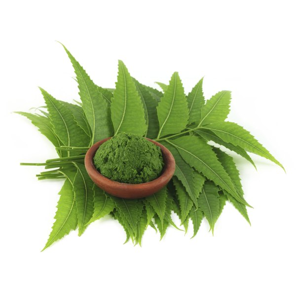 Neem leaves with neem powder in a bowl.