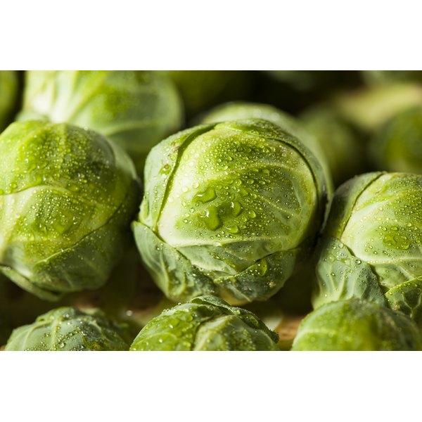 A close-up of a stalk of brussels sprouts.
