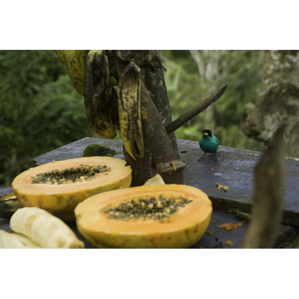 The tropical fruit papaya