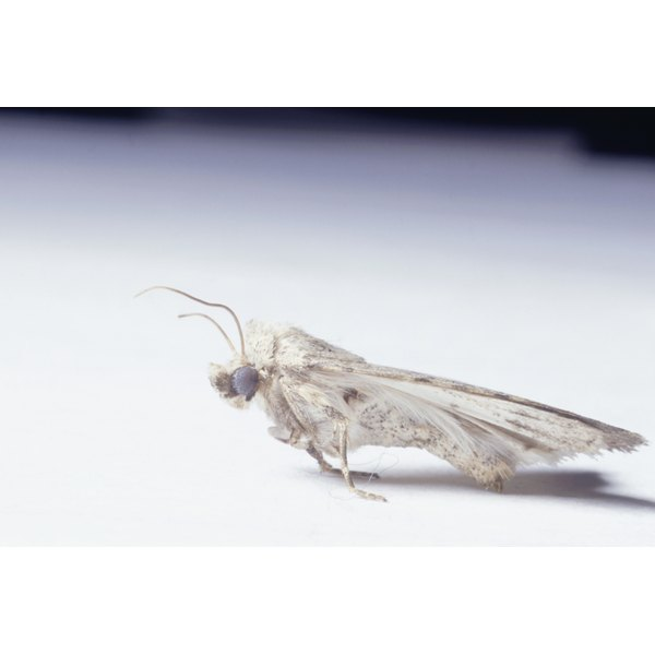 Protect your valuable cashmere garments from clothes moths.
