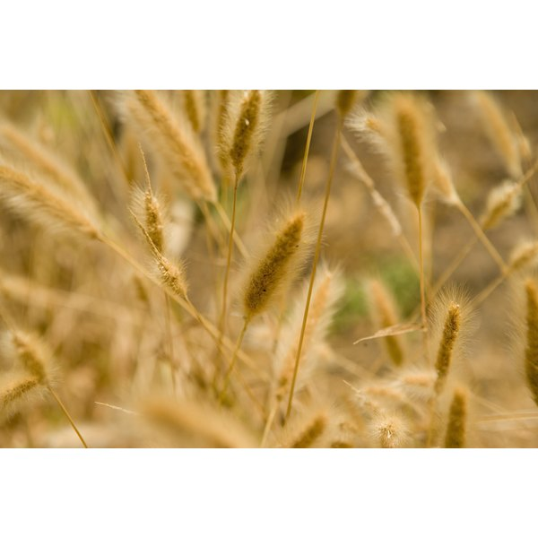 Those with gluten intolerance have a difficult time digesting gluten-containing foods, such as wheat.