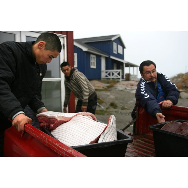 Three Inuit fisherman transporting tubs of whale meat.