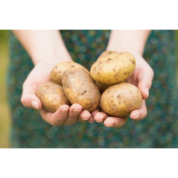 Close-up of a woman's hands holding raw potatoes.