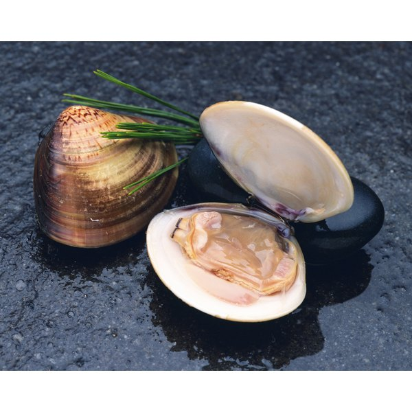 An open and a closed clam.