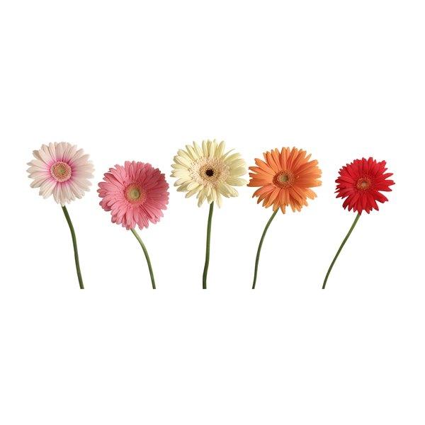 Gerbera daisies make a bright bouquet.