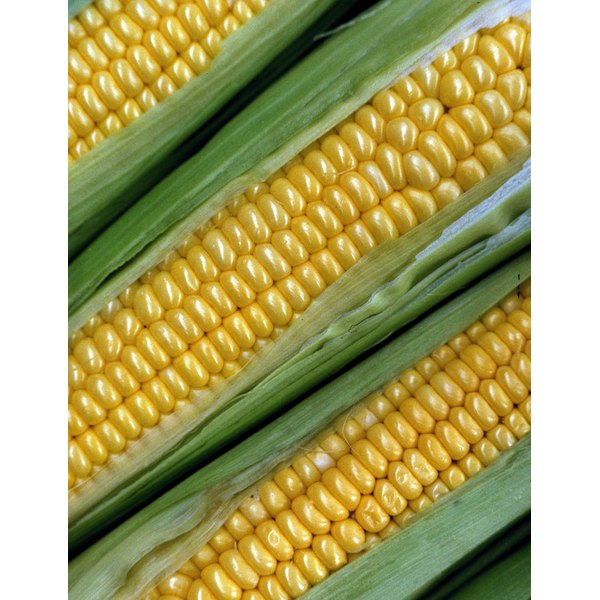 Properly prepared, corn on the cob can last up to eight months in the freezer.