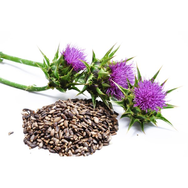 Milk thistle and its seeds on a white counter.