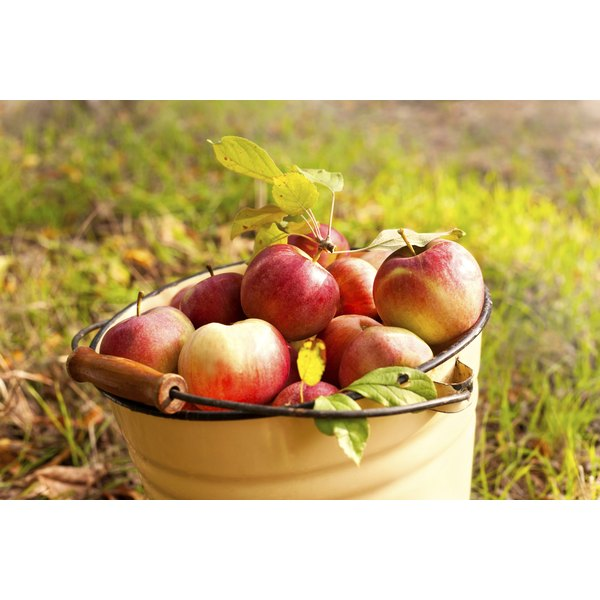 A pail of freshly picked apples in a meadow.