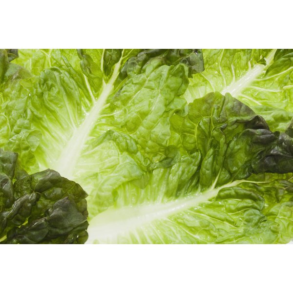 A closeup of lettuce leaves.
